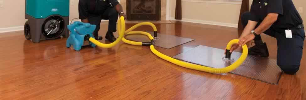 Image result for Call Us for the Best Mold Restoration Services Salt Lake City Utah Has to Offer